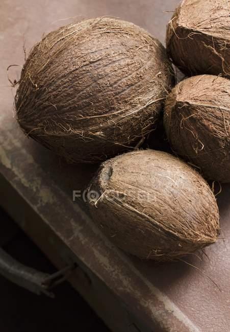 Cocos frescos maduros - foto de stock