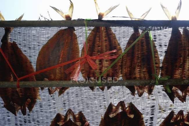 Крупным планом дневной вид рыбы, сушка на сетки — стоковое фото