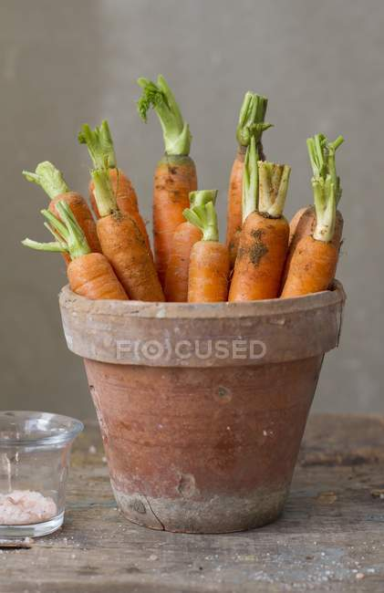 Reshly harvested carrots — Stock Photo