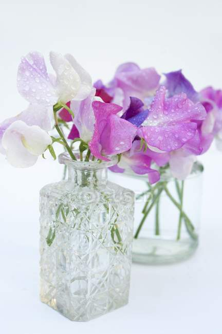 Closeup view of purple and white sweet peas in glass vases — Stock Photo