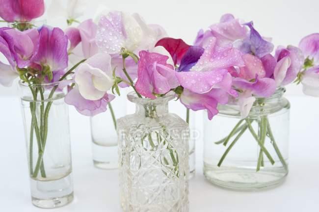 Flores de guisantes dulces en varios jarrones de vidrio - foto de stock