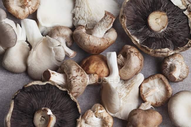 Frisch gepflückte Pilze — Stockfoto