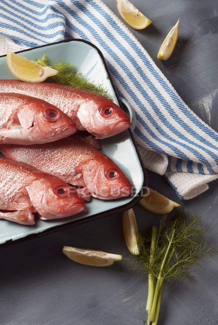 Fresh red snapper fish — Stock Photo
