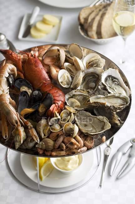 Fischplatte mit Hummer und Austern — Stockfoto