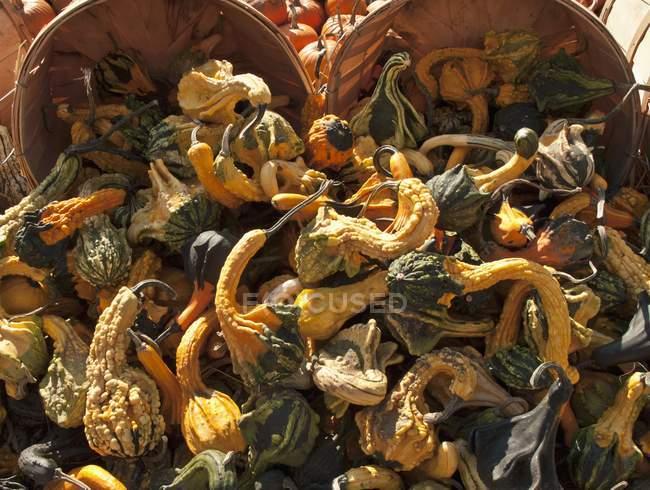 Cestas de calabaza ornamental - foto de stock