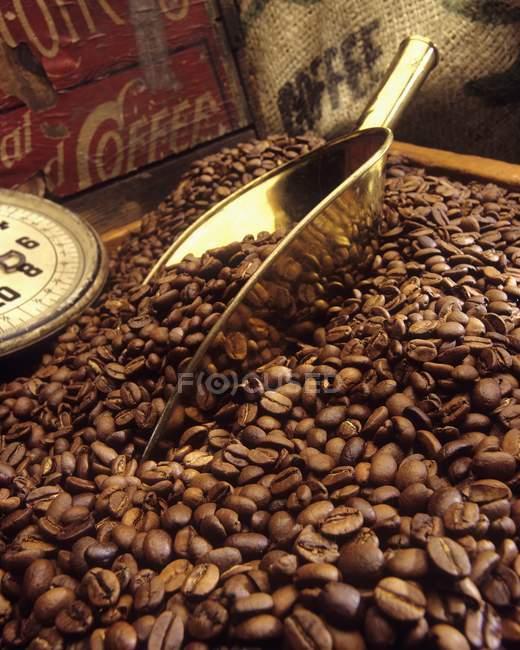 Granos de café en caja con cuchara - foto de stock