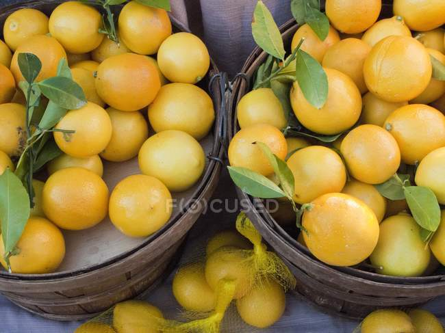 Fresh picked lemons — Stock Photo