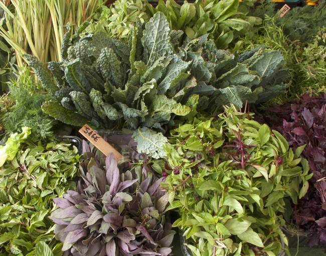 Chou frisé et herbes fraîches — Photo de stock