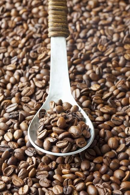 Кофейные зерна с ложкой — стоковое фото