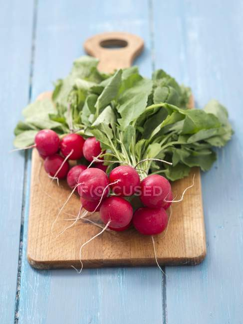 Fresh organic radishes — Stock Photo