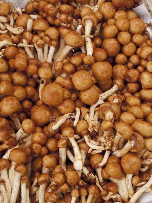Cogumelos nameko selvagens — Fotografia de Stock