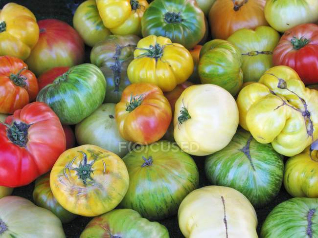 Various heirloom tomatoes — Stock Photo