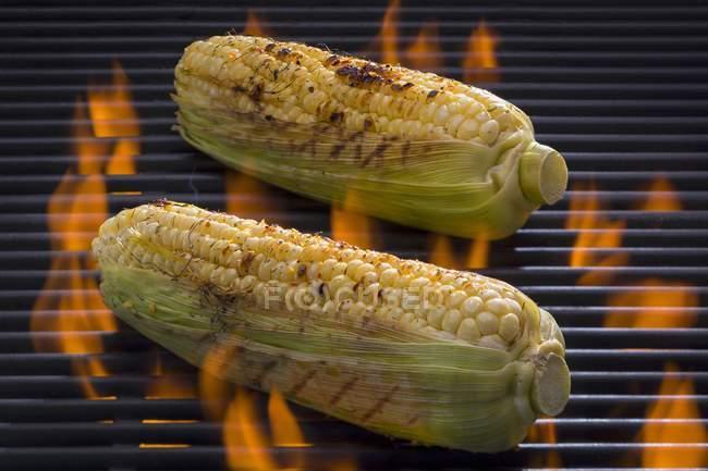 Corn-on-the-cob — Stock Photo