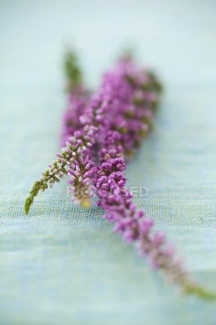 Крупним планом подання фіолетові квіти на лляної скатертини пастель синій — стокове фото