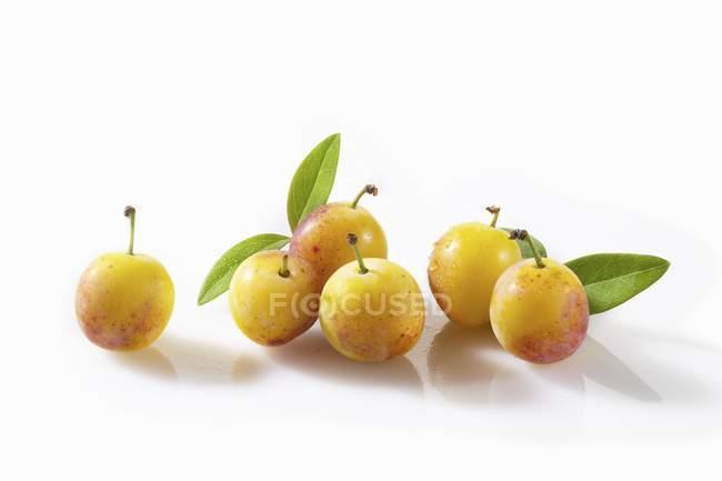 Ciruelas amarillas con hojas - foto de stock