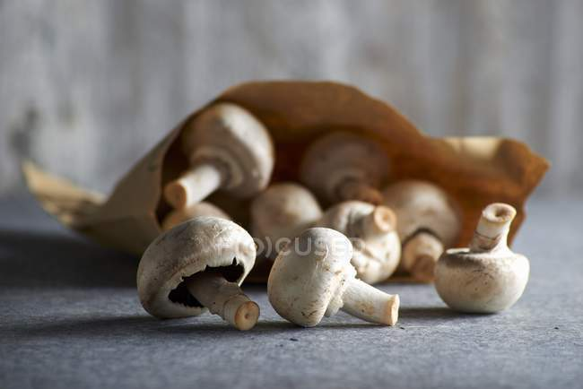 Fresh mushrooms with a paper bag — Stock Photo