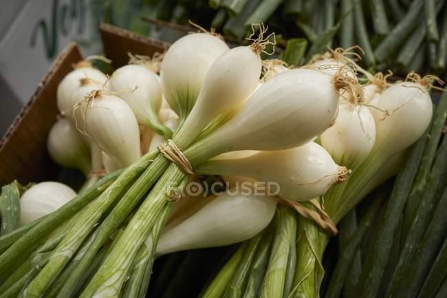 Paquets d'oignons de printemps — Photo de stock