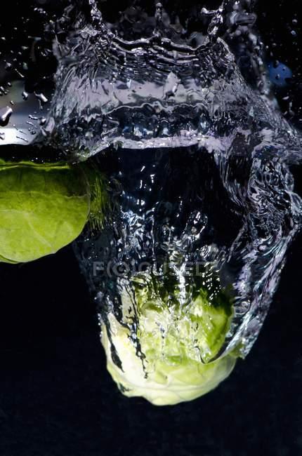 Cavoletti di Bruxelles su nero — Foto stock