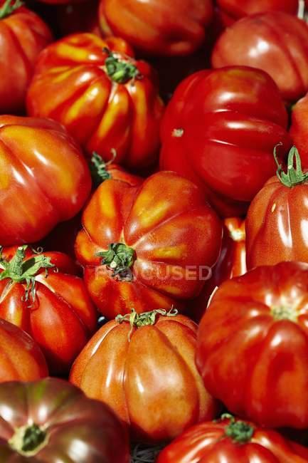 Свежие помидоры из бифштекса — стоковое фото