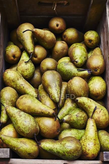 Engradado de peras maduras — Fotografia de Stock
