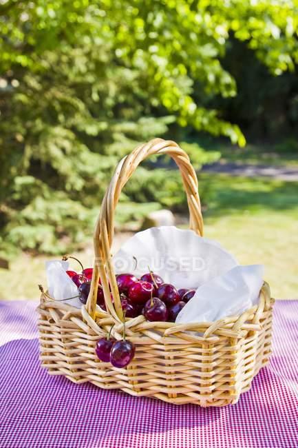 Korb mit frisch gepflückten Kirschen — Stockfoto