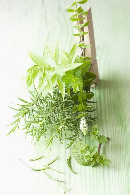 Rosemary with mint and lemon balm — Stock Photo