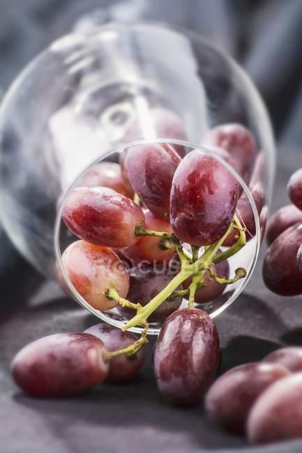 Rote Trauben im Weinglas — Stockfoto