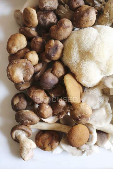 Top view of Maitake with Shitake, Piopinni, Oyster and Lion mane mushrooms — Stock Photo