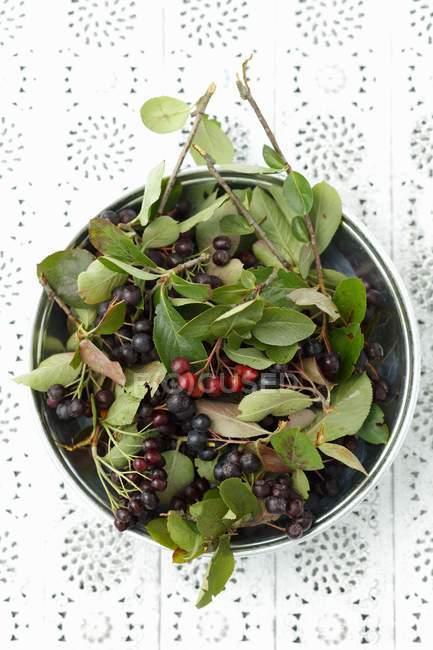 Свіжі взяв Аронія ягід з листям — стокове фото