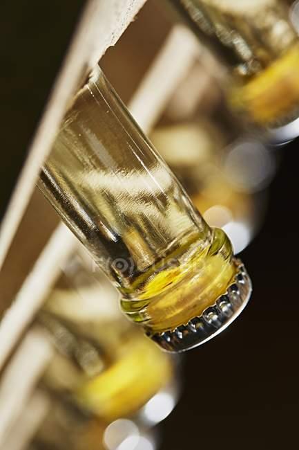 Шиї пляшку шампанського — стокове фото