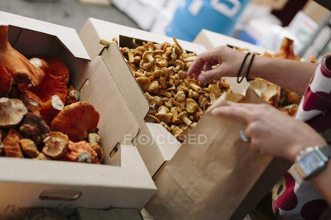 Hands picking chanterelles in crates — Stock Photo