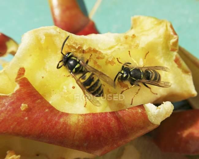 Avispas en una rebanada de manzana sobre fondo verde - foto de stock