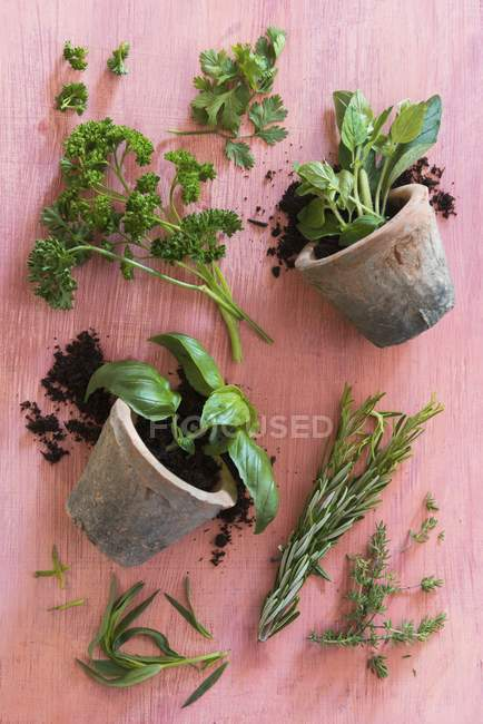 Top view of basil in a pots and fresh herbs on a wooden surface — Stock Photo