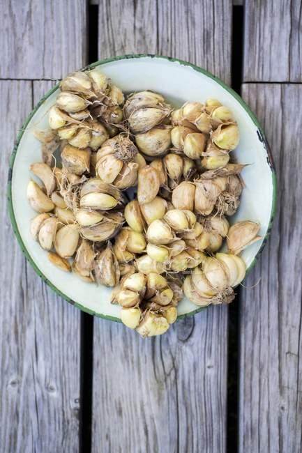Freshly harvested garlic cloves — Stock Photo