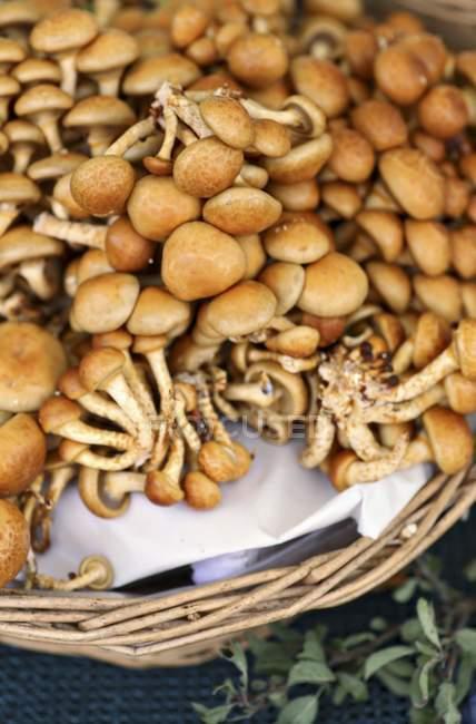 Nameko mushrooms, pholiota nameko — Stock Photo