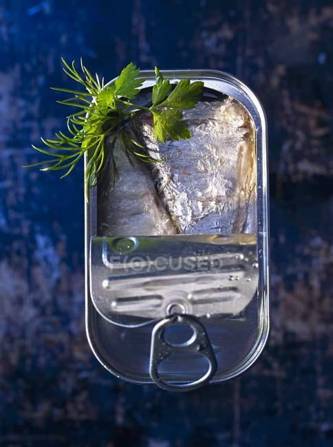 Жирной сардины в олова с укропом — стоковое фото