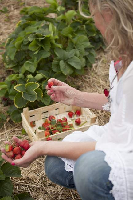 Woman picking strawberries — Stock Photo