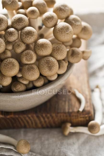 Cogumelos shimeji frescos — Fotografia de Stock