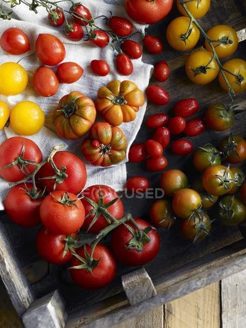 Différents types de tomates — Photo de stock