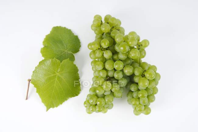 Grapes and vine leaves — Stock Photo