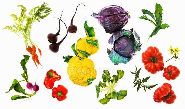 Varias verduras en una superficie blanca - foto de stock