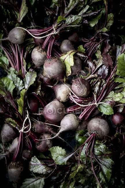 Bundles de remolacha fresca con hojas - foto de stock
