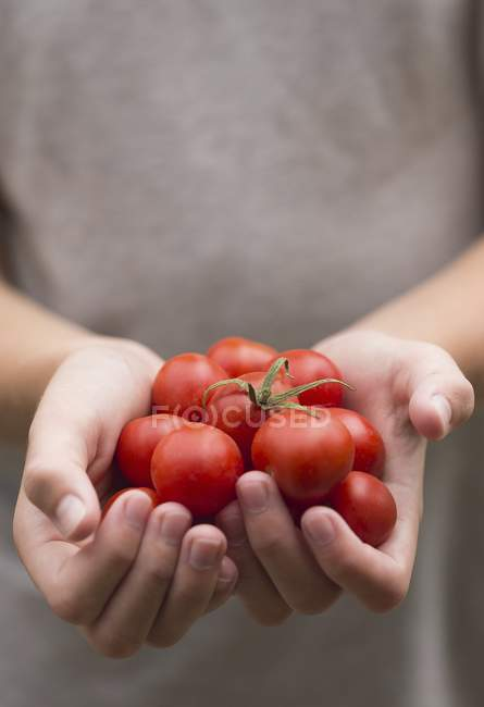 Hands holding tomatoes — Stock Photo