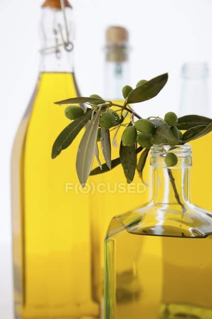 Branche d'olives dans une bouteille d'huile d'olive — Photo de stock