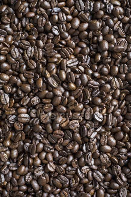 Свіжа кава в зернах — стокове фото