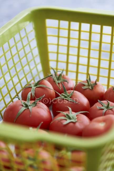 Свіжі помідори в кошику. — стокове фото