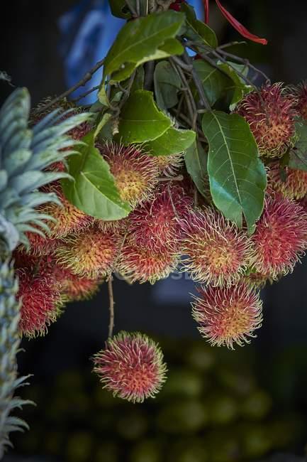 Rambutans crescendo na planta — Fotografia de Stock