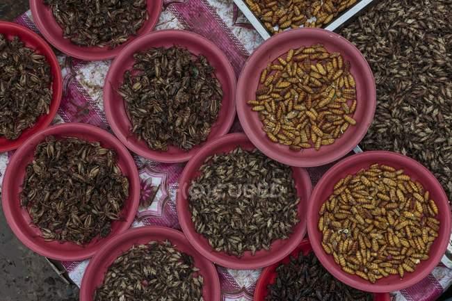Vista superior de gusanos de seda y grillos en tazones - foto de stock