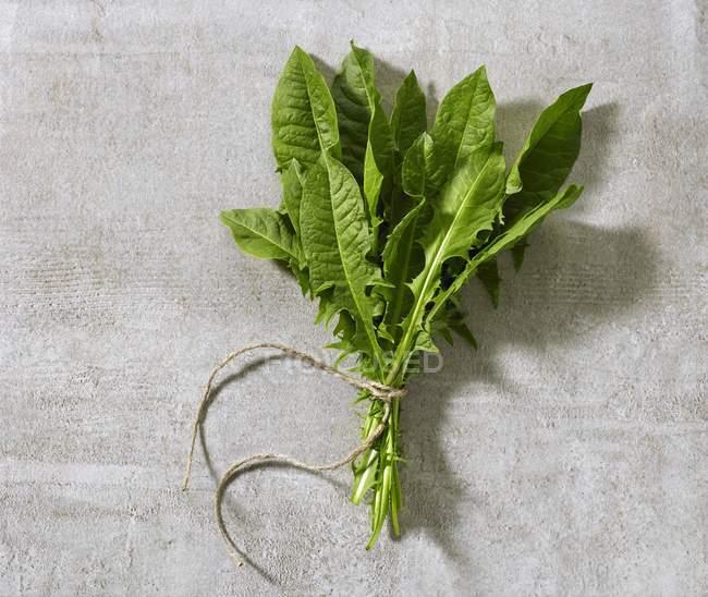 Manojo de hojas frescas de diente de león - foto de stock