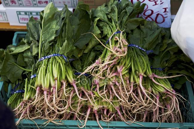 Bunches of Fresh spinach — Stock Photo